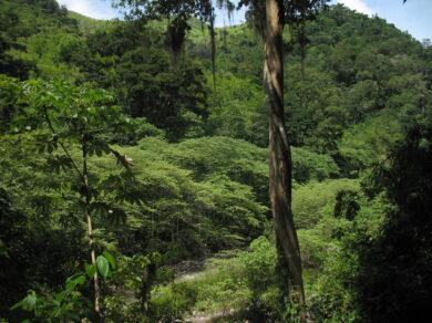 Avances del Proyecto «Marco hondureño de salvaguardas para proyectos de cambio climático»